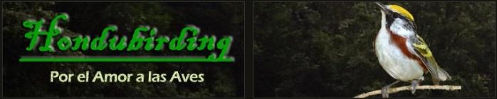 hondubirding